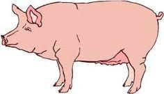 Afbeeldingsresultaat voor pig clipart