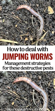 Do you have Asian jumping worms in your garden? Here's what to know about jumping worms vs. earthworms, how to identify jumping worms, and what to do if you find them in your garden. #jumpingworm #gardening #pestcontrol #invasives Organic Gardening, Gardening Tips, Earthworms, Top Soil, Garden Quotes, Love Garden, Natural Garden, Organic Matter, Garden Pests