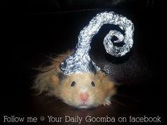 Hamster in a foil hat.