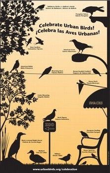 Celebrate Urban Birds Kit gives you free posters, seeds and more
