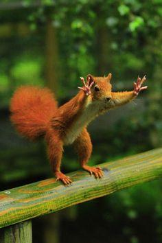 Squirrel!!!!