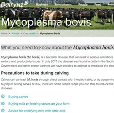 """DairyNZ information for farmers on """"What you need to know about the Mycoplasma bovis infection. Bovis Homes, Create An Animal, Bacterial Diseases, Farmers, Need To Know, Conditioner, Dairy, Website, Health"""