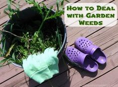 With these 6 easy tips on how to deal with garden weeds, weeding can even become…