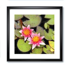 Pink Lotus Photography, Digital Downloads, Flower Prints, Printables, Photo Prints, Pink Flowers, Asian Photography, Japanese Photography by RSKSdesign on Etsy https://www.etsy.com/listing/249670931/pink-lotus-photography-digital-downloads