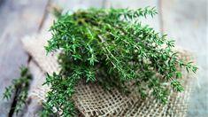 11 pravidel, jak správně pěstovat tymián obecný (Thymus vulgaris). Nejlepší recepty s tymiánem. Jak a proč tymián pomáhá zdraví
