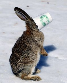 Rabbit and a Cup