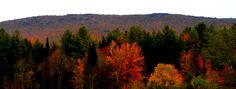 We are at peak fall foliage on 10/5/13.  Photo taken on Elmore Mountain Road, Stowe, VT    www.stowemeadows.com #foliage #stowemeadows