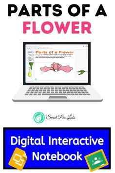 Parts of a Flower Digital Interactive Notebook Elementary Science Classroom, Elementary Education, Science Lessons, Lessons For Kids, Student Learning, Teaching Kids, Flower Reproduction, Steam Education, Parts Of A Flower