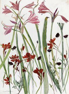 Elizabeth Blackadder - The Scottish Gallery, Edinburgh - Contemporary Art Since 1842 Illustration Botanique, Plant Illustration, Botanical Drawings, Botanical Prints, Deviantart Zeichnungen, Deviantart Drawings, Blackadder, Nature Sketch, Fruit Art