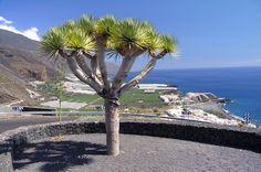 Vista de Puerto Naos
