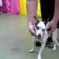 SAN BERNANDINO, CA - URGENT on 1/7@DEVORE SanBern a Chihuahua for adoption in San Bernardino, CA who needs a loving home.