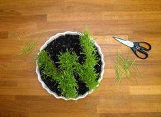 Wheatgrass Monogramming