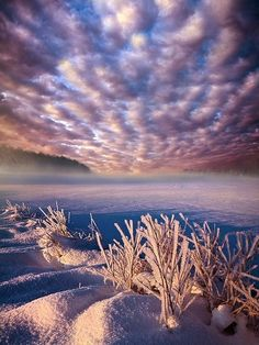 ✯ Dream of Waking by Phil Koch