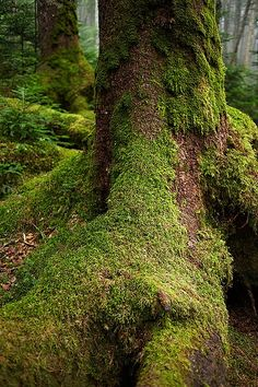 The primitive forest - 2   by Bernard Languillier on Flickr