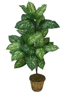 38' Dieffenbachia Artificial Silk Plant with No Pot (pack of 3) *** Want additional info? Click on the image.
