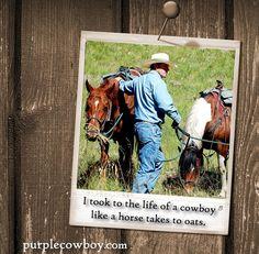 Find a bottle of Purple Cowboy near you: Wines, Horses, Bottle, Purple, Flask, Horse