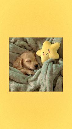 Cute Dog Wallpaper, Cute Galaxy Wallpaper, Cute Patterns Wallpaper, Cute Disney Wallpaper, Cute Wallpaper Backgrounds, Animal Wallpaper, Cartoon Wallpaper, Cute Dog Photos, Cute Animal Photos