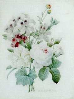 White roses, a white peony, a carnation and pelagonium by Pierre Joseph Redouté