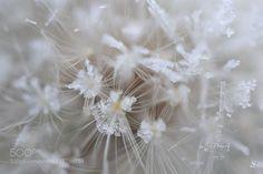 Dandy Freeze by nevaeh33
