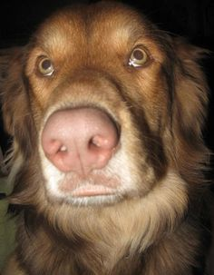 How To Stop Bratty Barking. #Pet #Tips #Tricks