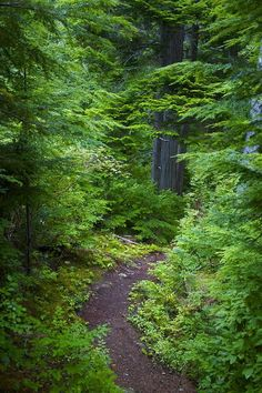 Paths thru The Forest Forest Path, Tree Forest, Forest Trail, Wild Forest, Forest Mountain, Beautiful World, Beautiful Places, All Nature, Nature Tree