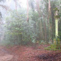 Mañana de niebla... #niebla #mañanadeniebla #tardedepaseo #crucero #bosque #otoño #galiciamágica #rutadelacamelia #pazodesantacruzderivadulla #pazodeortigueira #pazosconhistoria #vedra #coruña #cercadesantiagodecompostela