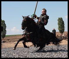 Brown stallion 2 by Rollwurst on DeviantArt