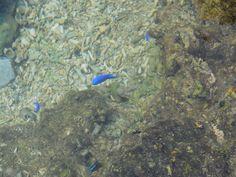 #fish #blue #okinawa
