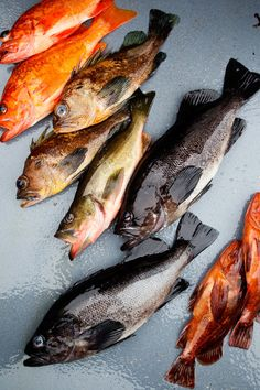 Fish of Alaska by Beatrice Peltre Food Styling & Photography