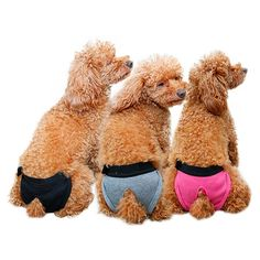 Kuoser 3 PCS Reusable Washable Female Dog Diaper Durable Velcro Doggie Diapers pants Sanitary Pants Underwear Panty For Pet Dog Puppy Teddy ** Want to know more, click on the image. (This is an affiliate link and I receive a commission for the sales)