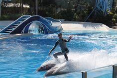 Promoting the idea that dolphins at SeaWorld are happy is the company's strategic way of driving up sales. Learn the truth and take action!