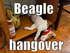 Awww... #beagle
