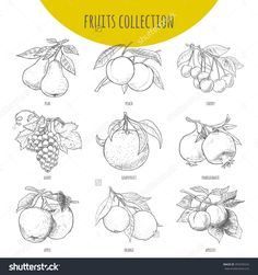 Illustration Of Fruits Bunches On… Apple Illustration, Vegetable Illustration, Botanical Illustration, Apple Sketch, Fruit Sketch, Leaves Sketch, Fruit Tattoo, Fruit Icons, Leaf Template