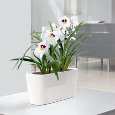 Have to have it. Lechuza Windowsill Self-Watering Indoor Planter - $39.99 @hayneedle.com