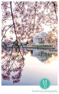 Cherry Blossoms at Sunrise.