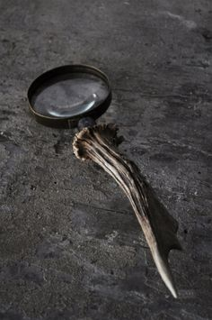 Magnifying Glass On Pinterest Magnifying Glass