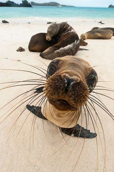 """""""Oh! Is this called a camera?!"""" (Photo By: Justin Hofman.)"""