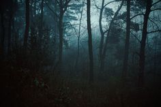 Landscape by Maximilian Motel #landscape #nature #outside #photography