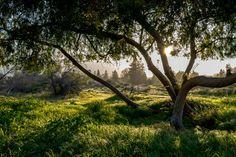 Los Gatos Trail CA [OC][60004000] #reddit
