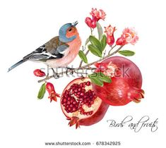 Vector illustration with bird on a pomegranate branch with fruits and flowers isolated on white. Design element for Wedding, birthday, halal cosmetics. Can be used for poster, invitation or scrapbook - buy this vector on Shutterstock & find other images.