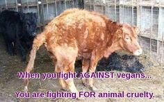 when you fight against vegans ... you are fighting for animal cruelty #vegan