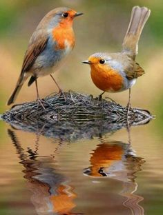 Love those birds ~ delightful to watch