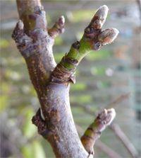 tavaszi lemoso permetezes Flora, Gardening, Plant, Lawn And Garden, Plants, Horticulture