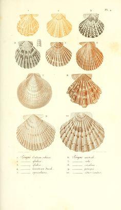 Leçons élémentaires sur l'histoire naturelle des animaux  1847