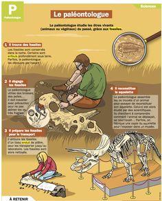 Fiche exposés : Le paléontologue