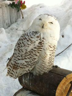 aren't i georgous Owl Photos, Owl Pictures, Owl Bird, Pet Birds, Owl Doorstop, Animals And Pets, Cute Animals, Owl Who, Animal Totems