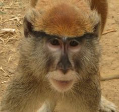 We have a monkey! Her name is Bongo.