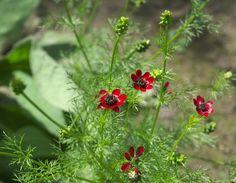 #flowers #red #nature #garden #summer