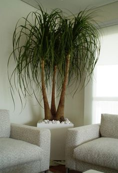 When you try to design the interior decoration of your home, you may want to move the indoor garden designs into your home. In such a case, indoor pla. Indoor Trees, Indoor Plants, Indoor Gardening, Decoration Plante, House Plants Decor, Bathroom Plants, Interior Plants, Tropical Plants, Artificial Plants