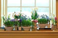 4 Smashing Cool Tricks: Backyard Garden Planters How To Build large front garden ideas.Garden Ideas Design How To Grow. Backyard Garden Landscape, Gravel Garden, Small Backyard Gardens, Balcony Gardening, Large Backyard, Garden Planters, Spring Flowering Bulbs, Spring Bulbs, Vegetable Planters